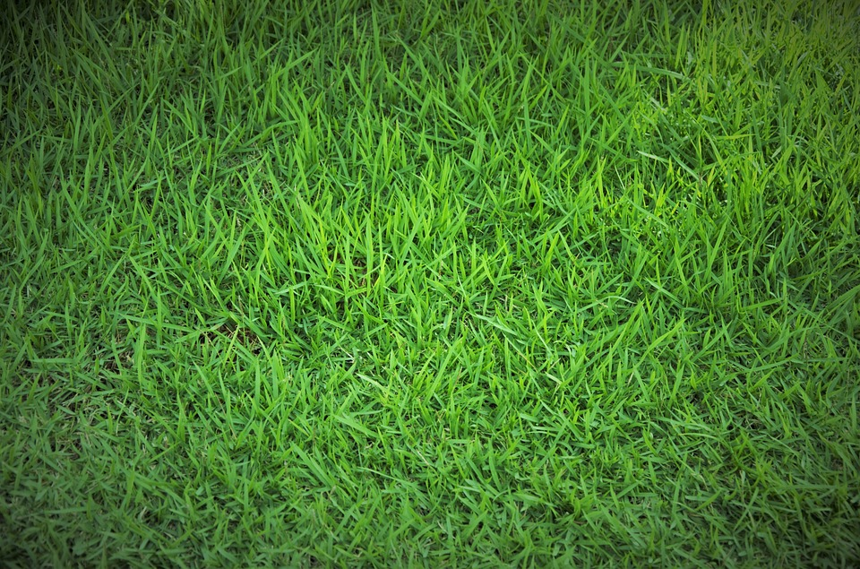 5 Spring Lawn Care Tips For Green Grass