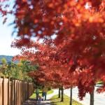 Fall in The Meadows   Castle Rock CO